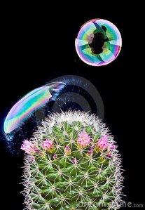 bubble-bursting-cactus-18318709